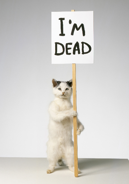 CAT by David Shrigley, 2007